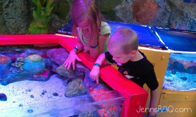 sea life aquarium hands on