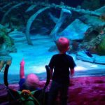 Toddler Tuesdays at LEGOLAND Discovery Center and SEA LIFE Aquarium (Grapevine, Texas)