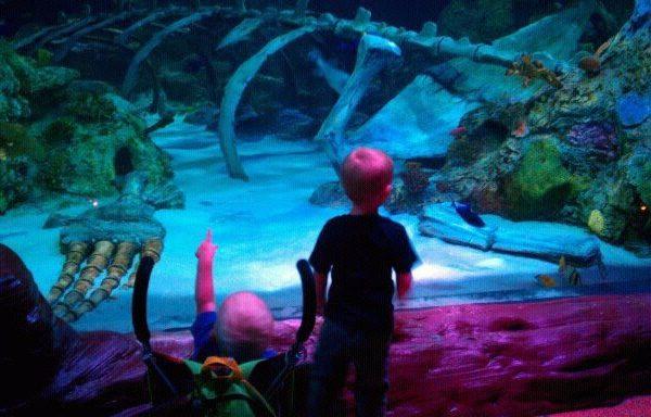 Toddler Tuesdays at LEGOLAND Discovery Center and SEA LIFE Aquarium (Grapevine, Texas)