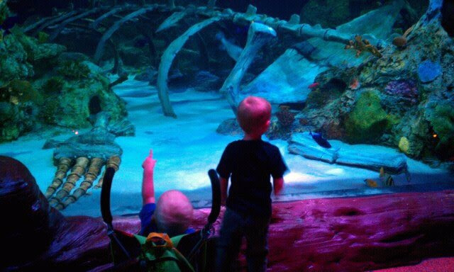 Toddler Tuesdays At Legoland Discovery Center And Sea Life