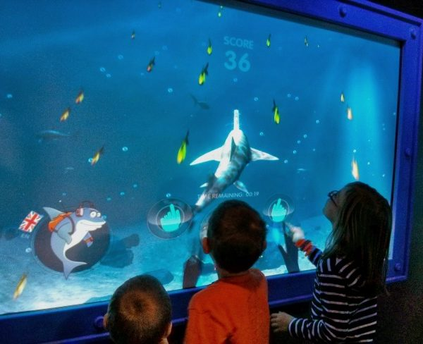 Shark Mission at Sea Life Grapevine TX