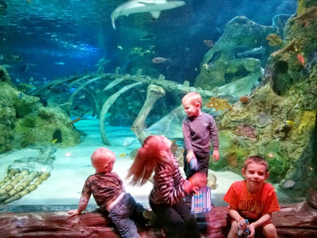 Sea Life Grapevine Shark Exhibit