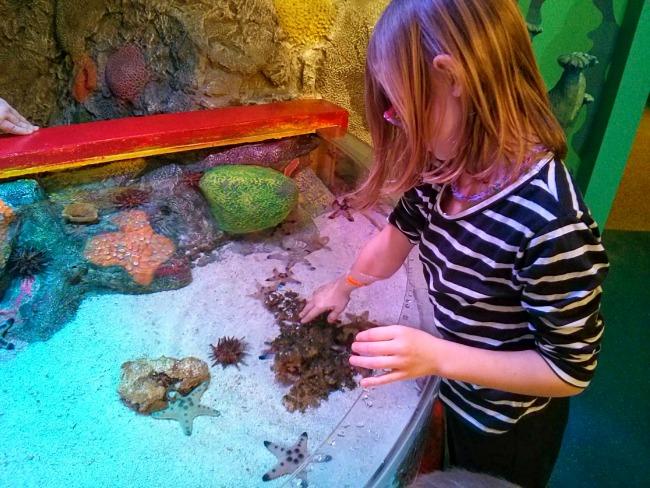 Hands on at the Sea Life Aquarium