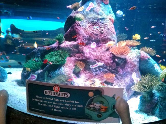 Sea Life Aquarium Grapevine Octonauts Fun Facts