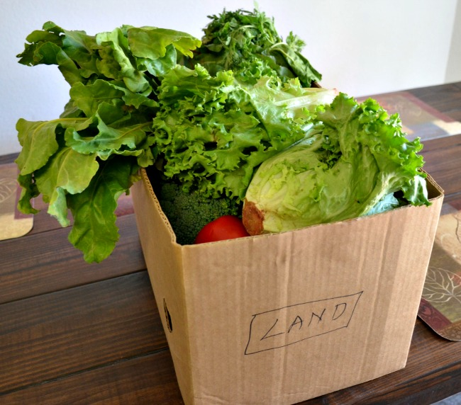 Your Health Source Co-op Organic Produce Share in the Dallas Fort Worth area