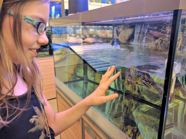Grace checking out turtles at the pet store
