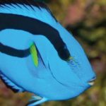 See Dory Up Close at SEA LIFE Aquarium Grapevine