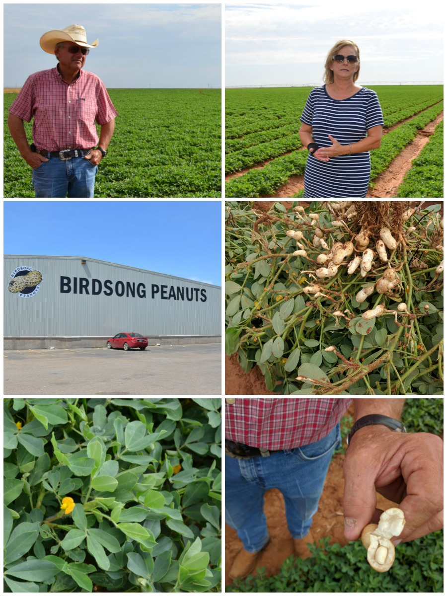 Texas Peanut Blogger Tour in Lubbock Texas