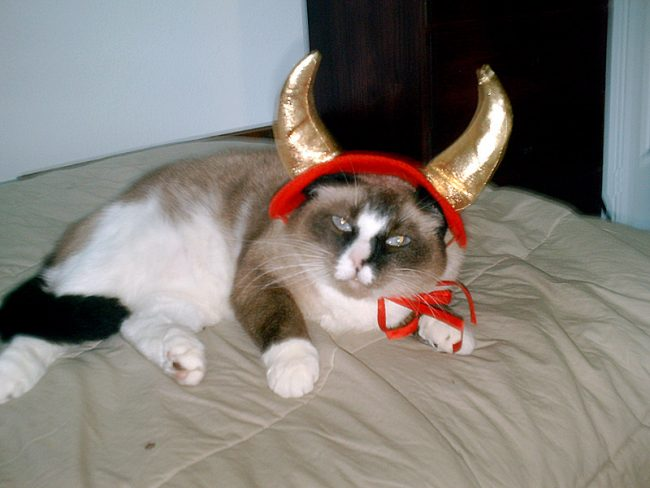 Make your own cat treats this Halloween with tuna and catnip!