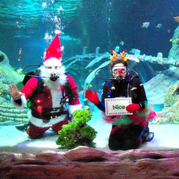 Scuba Diving Santa at SEA LIFE Grapevine