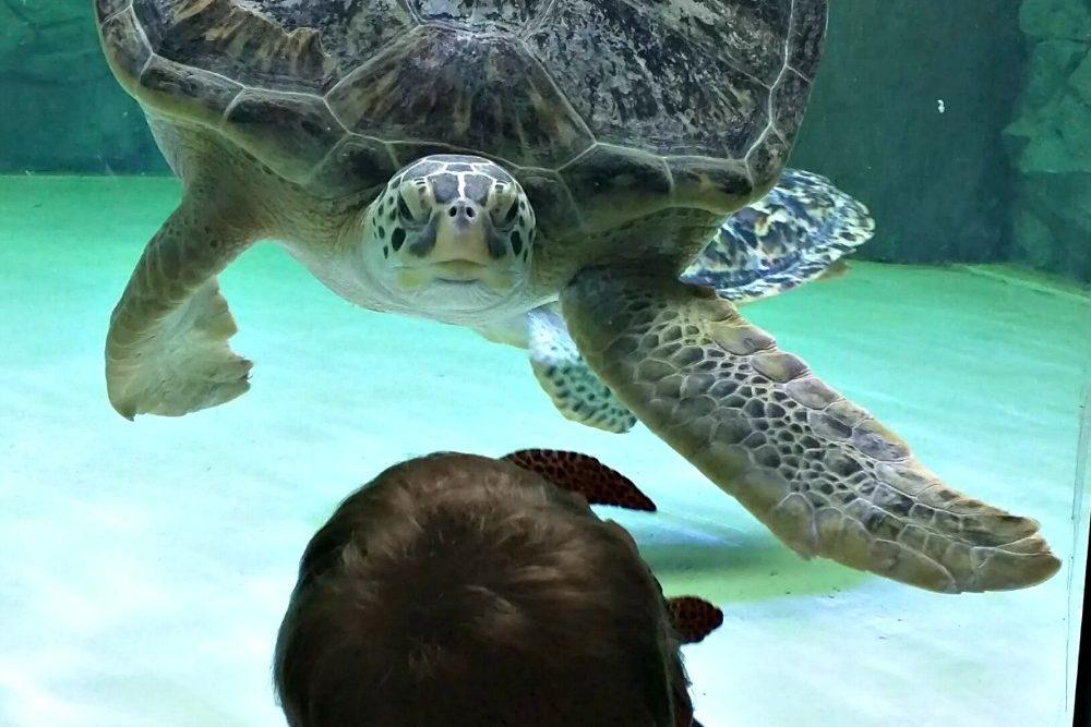SEA LIFE Grapevine Introduces NEW Sea Turtle Rescue and Rehab Center!