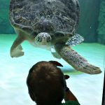 SEA LIFE Grapevine Introduces NEW Sea Turtle Rescue and Rehab Center!