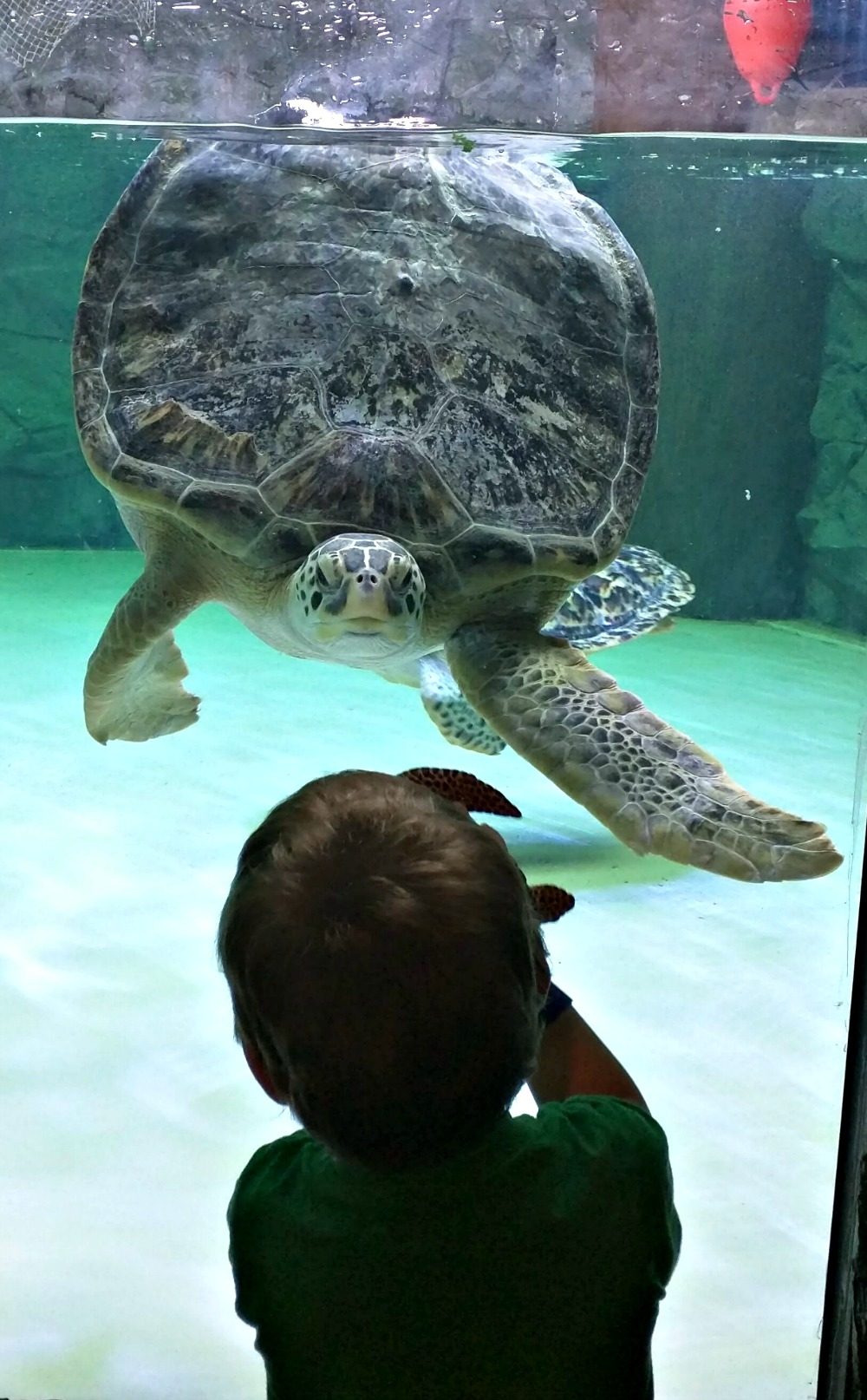 SEA LIFE Sea Turtle Rescue
