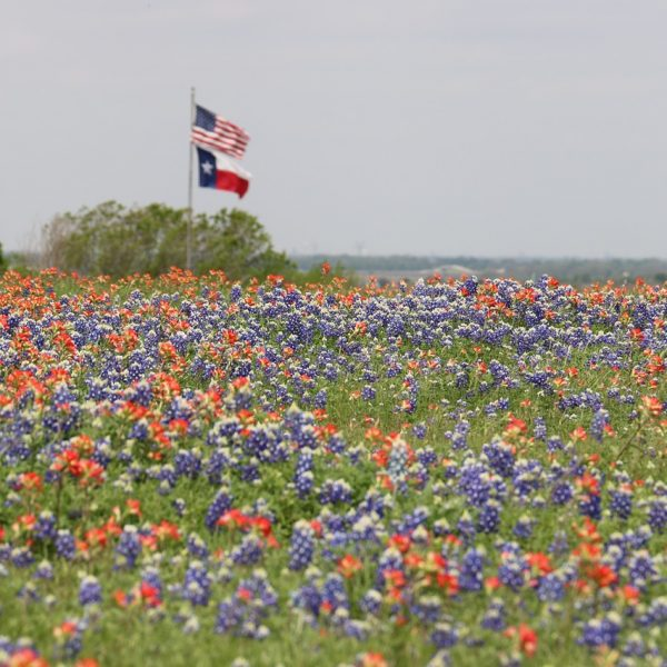 3 Weird Roadside Attractions in Texas