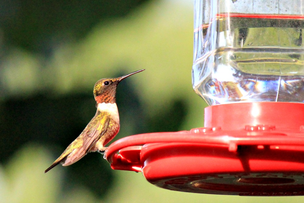 How to Attract Butterflies and Hummingbirds to Your Garden - Feeders