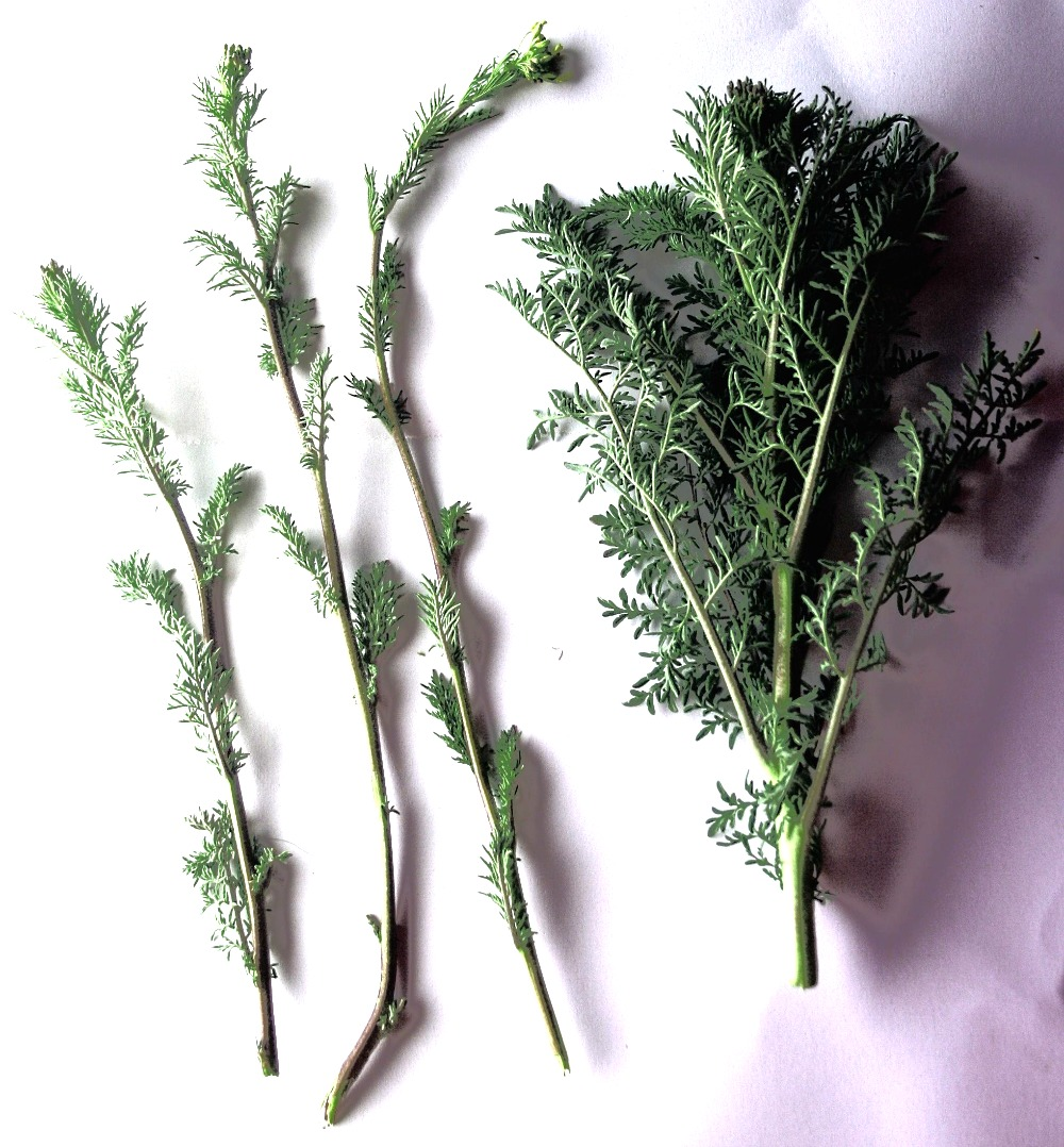 Adding Flavor to Recipes with Herbs Tips