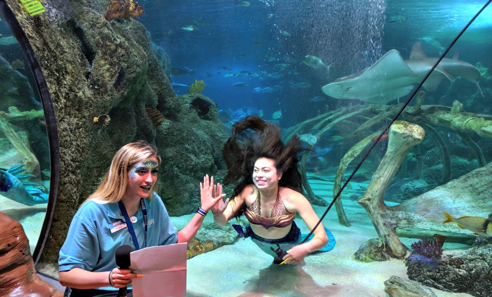 SEA LIFE GRAPEVINE Mermaid Experience