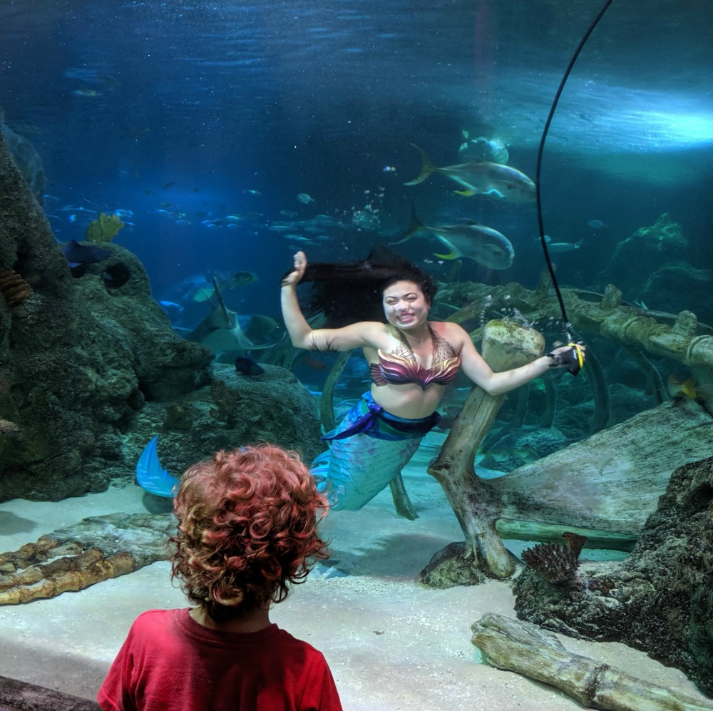 SEALIFE Aquarium Grapevine TX Mermaid Appearance
