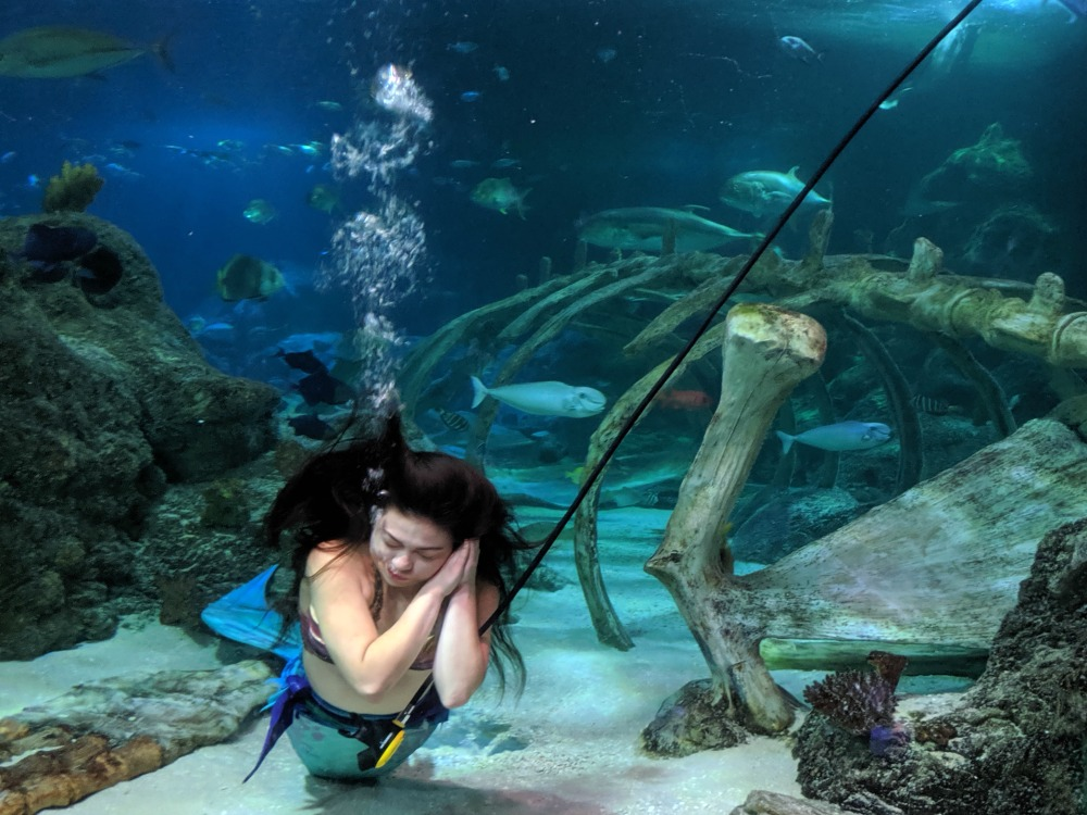 SEALIFE Aquarium Grapevine TX Mermaid Experience